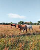Horses at ranch