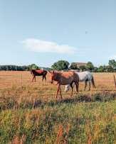 Horses at ranch