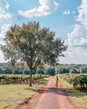 Nature shot in Texas winery