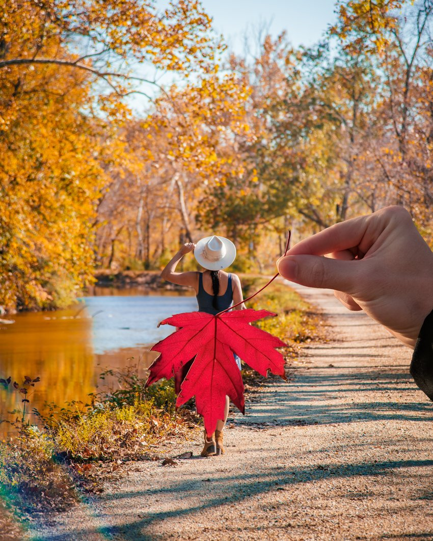 creative leaf photography at c&o canal