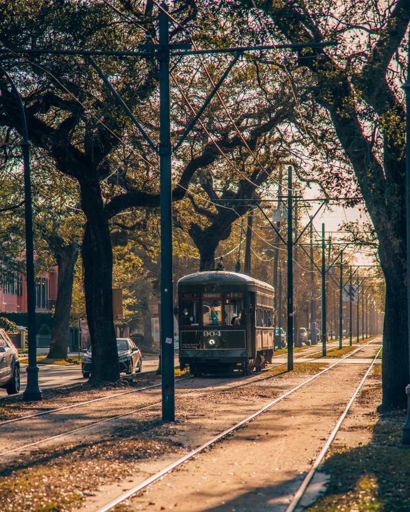 Charles streetcar live oak trees New Orleans
