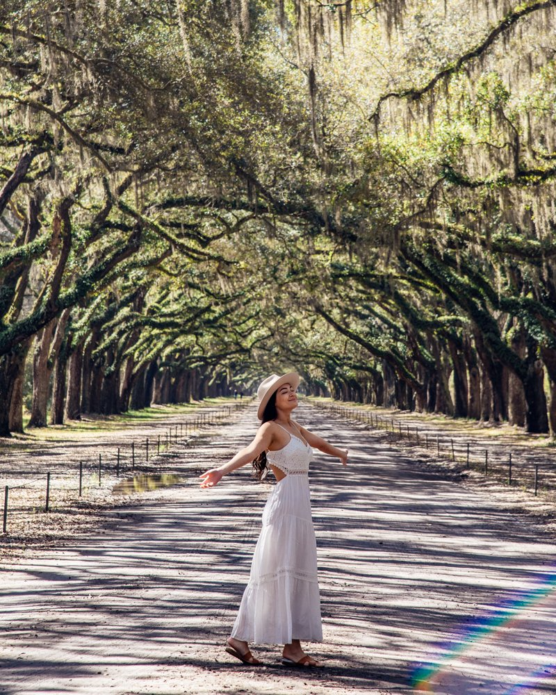 Wormsloe State Historic Site Driveway Live Oak Tree Tunnel Savannah