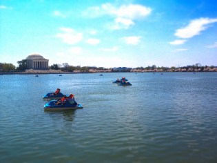 Paddleboats On The Tidal Basin