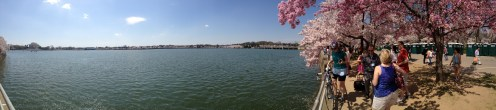 Panorama of the Cherry Blossoms on the Tidal Basin