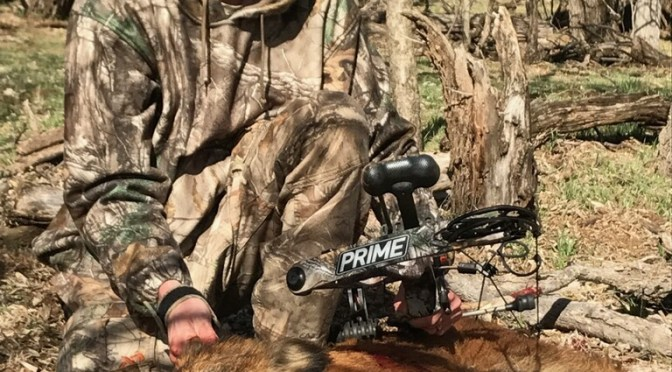 Amazing Broadhead Kill Shot on Wild Hog [VIDEO]
