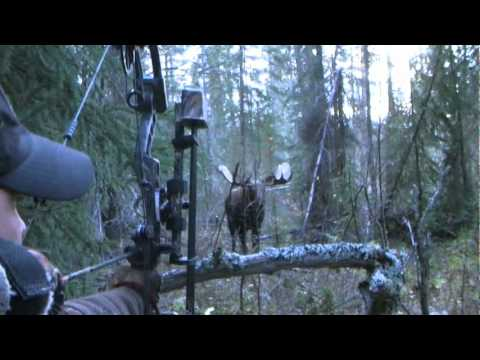 Would You Get This Close to a Bull Moose? [VIDEO]