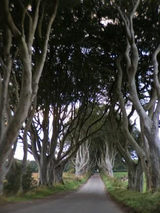 A big storm came knocked nearly 1/3 of the Dark Hedges down.