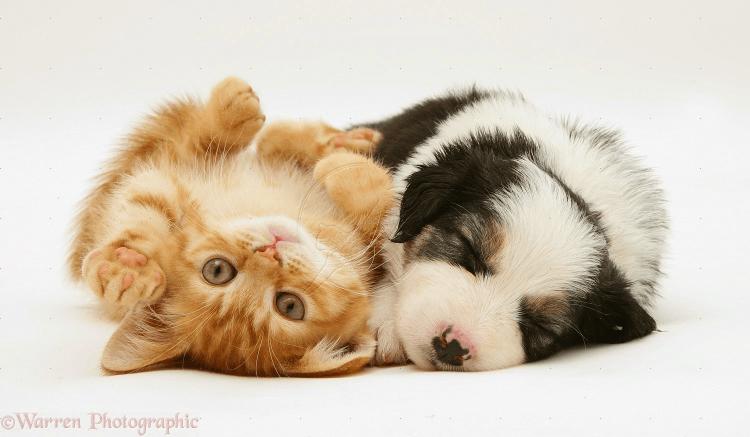 Download 76+  Gambar Kucing Lucu Lagi Sakit Terbaru