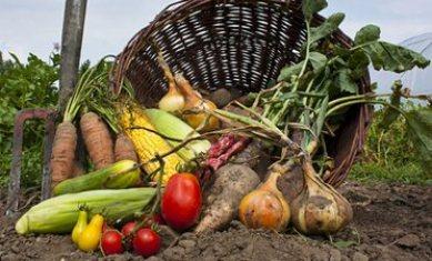 eko-proizvodi-ekoloska-poljopriverda-midi