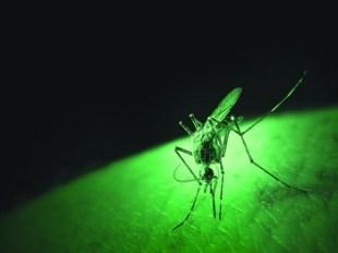 komarac-ilustracija-midi