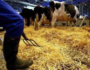 mlijeko-farma-midi