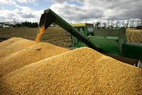 poljoprivreda-zetva-kukuruz-midi