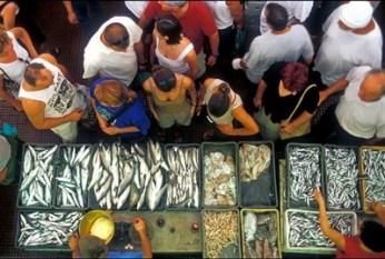 ribarnica-veletržnica ribe-midi