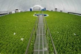 robotizirana farma midi
