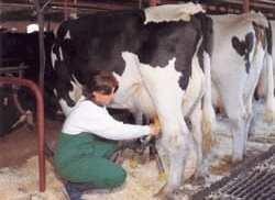 stocar-mljekar-mlijeko