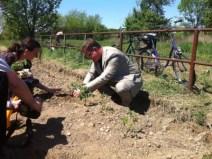 varazdin-community-garden-midi
