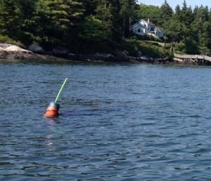 Bobbing lobster buoy