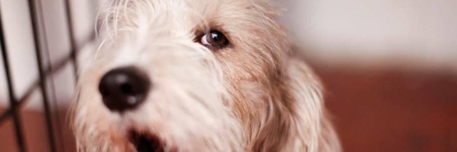 A mejores diagnósticos veterinarios,  mascotas más saludables