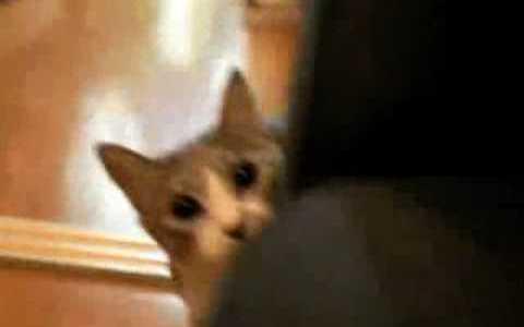 Comparte Síguenos Acabo de echarme unas buenas risas con estos dos vídeos de gatos: – […]