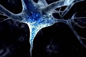 La capacidad del cerebro