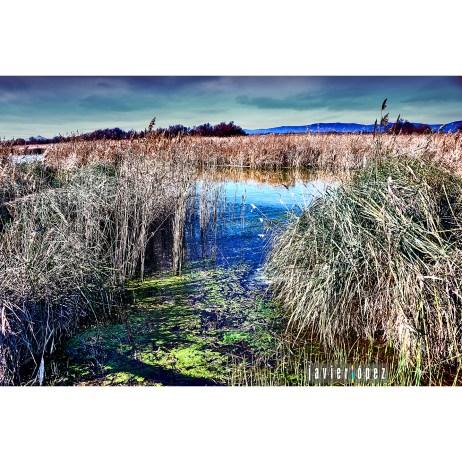 2019 Las Tablas de Daimiel National Park (La Mancha)