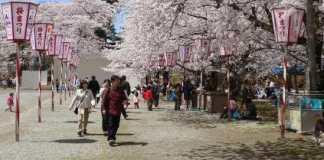 La floración de los cerezos en Japón se acerca