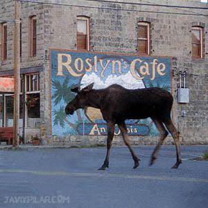 "Roslyn Cafe. ""Doctor en Alaska"" (""Northern Exposure"")"