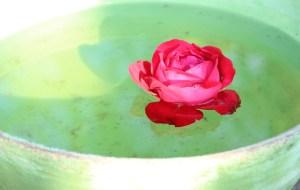 rose in water - feng shui