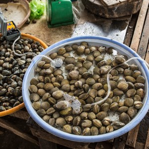Fresh shell fish at Phan Rang fresh market