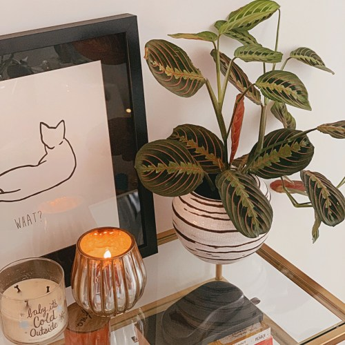 Jaye Rockett home candle prayer plant cat print sidetable