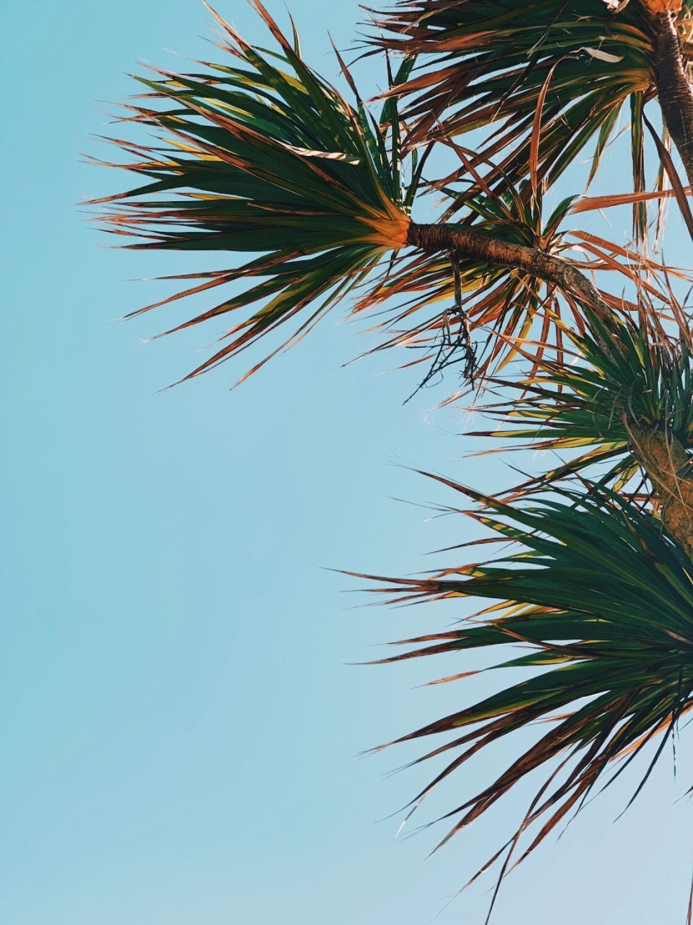 Jaye rockett things worth photographing palm trees blue sky bournemouth beach