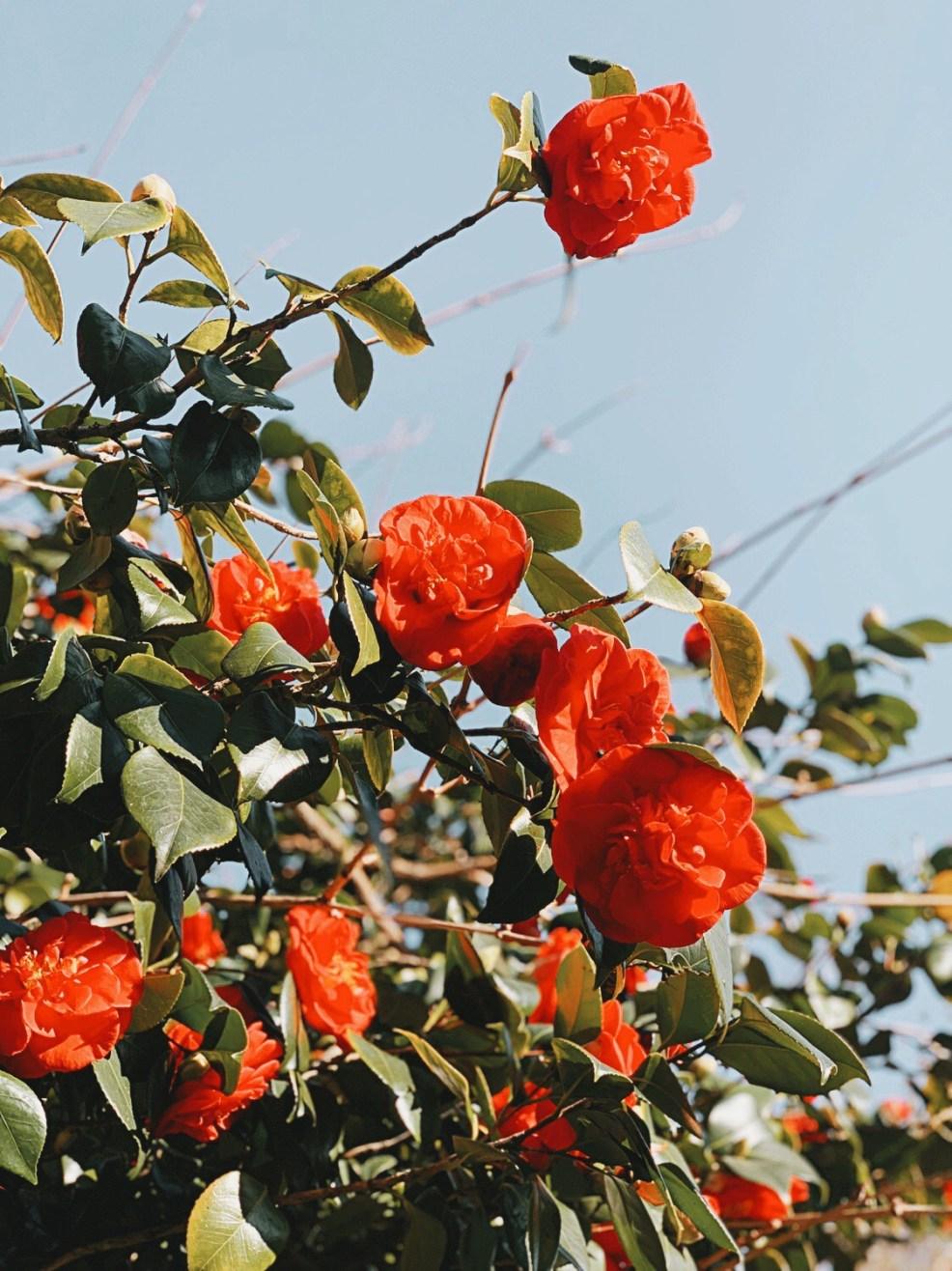 Jaye rockett things worth photographing spring bush blooming