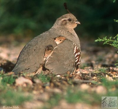 Wild bird nesting behavior varies by species - Jay's Bird Barn