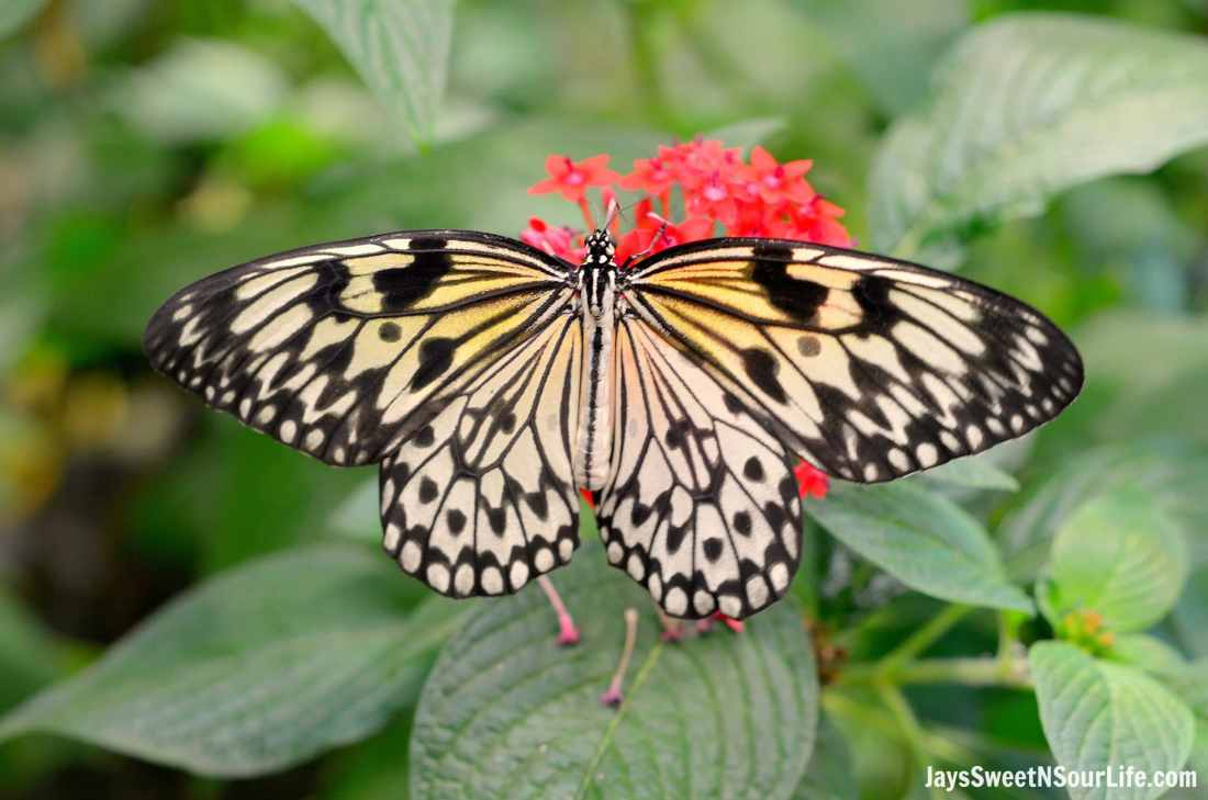 Hershey Gardens Butterfly House