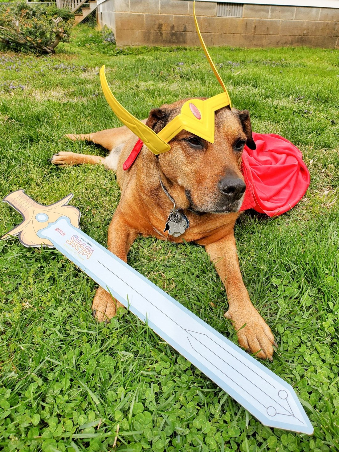 Beau in She Ra Costume. Mark your calendars because on April 26th DreamWorks She-Ra and the Princesses of Power is roaring back to Netflix for the Honor of Grayskull. The series creator promises there will be cool new characters and story lines that didn't make it into the first season of She-Ra.