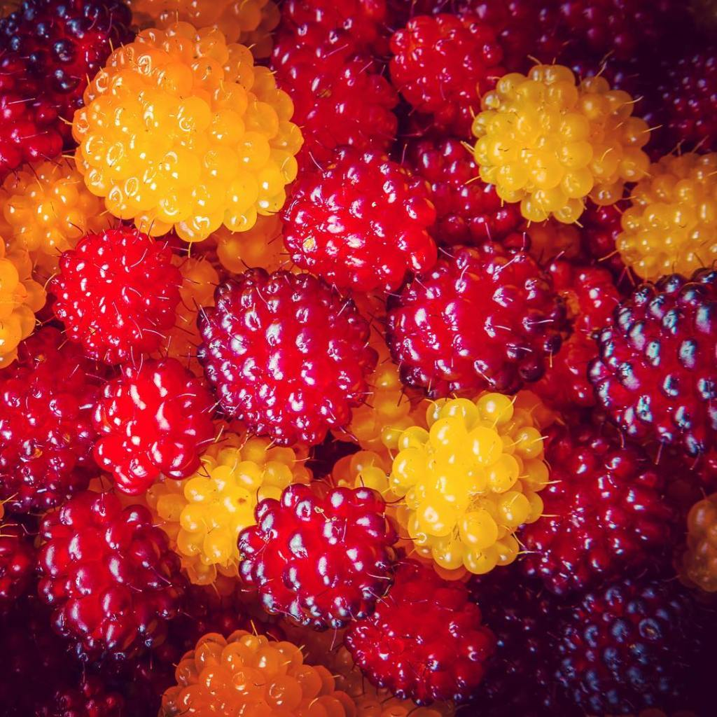 Berries  Simply delicious    berries color salmonhellip