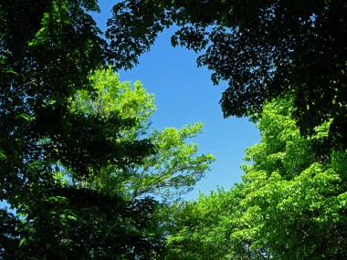 Blue sky and green trees