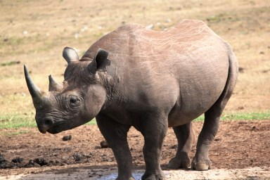 Leave our Rhino alone!!