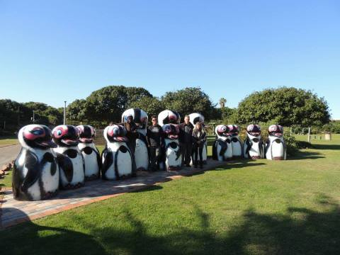 Supertubes Surfing Foundation penguins