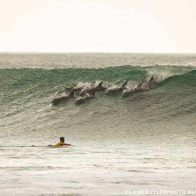 Even the dolphins joined in the fun during the JBay Winterfest