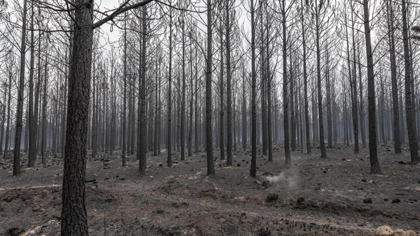 tsitsikamma fire garden route fire