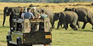 Affordable safari in south africa