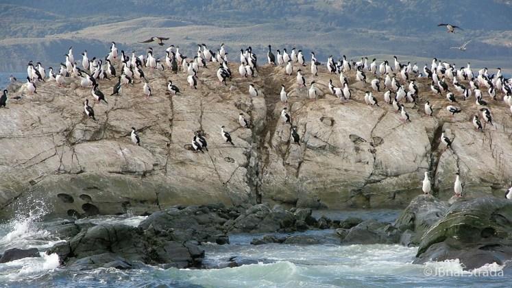 Argentina - Ushuaia - Navegacao no Canal de Beagle - Isla de los Pajaros