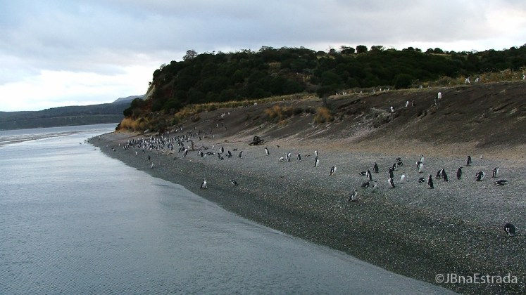 Argentina - Ushuaia - Navegacao no Canal de Beagle - Pinguinera