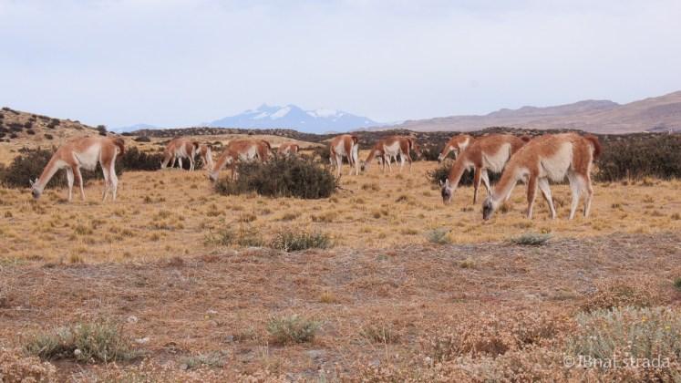 Chile - Parque Nacional Torres del Paine - Estrada Portaria Sarmiento