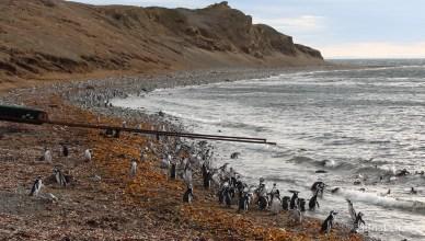 Chile - Punta Arenas - Estreito de Magalhaes - Isla Magdalena