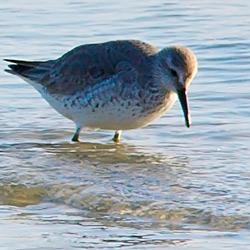 Wadden Sea - img_6746_closeup