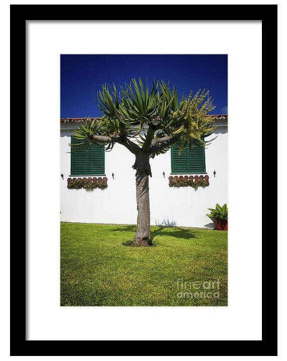dragon tree garden house framed print