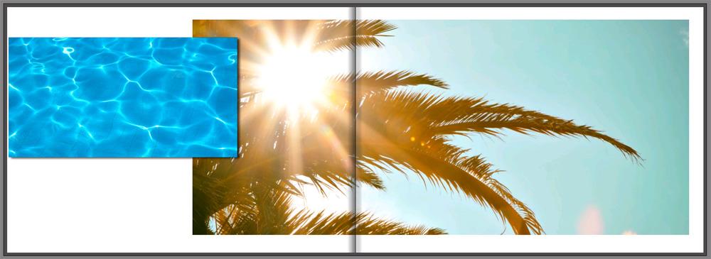 photo book palm tree