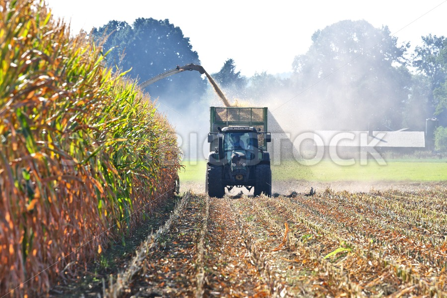 Maize harvest in a dumpster with tractor - Jan Brons Stock Images